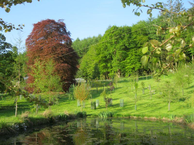 Woodlandgarden